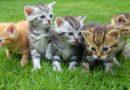 De nombreux chatons arrivent !