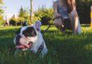 Reprise des formations bénévoles chiens le 7 septembre