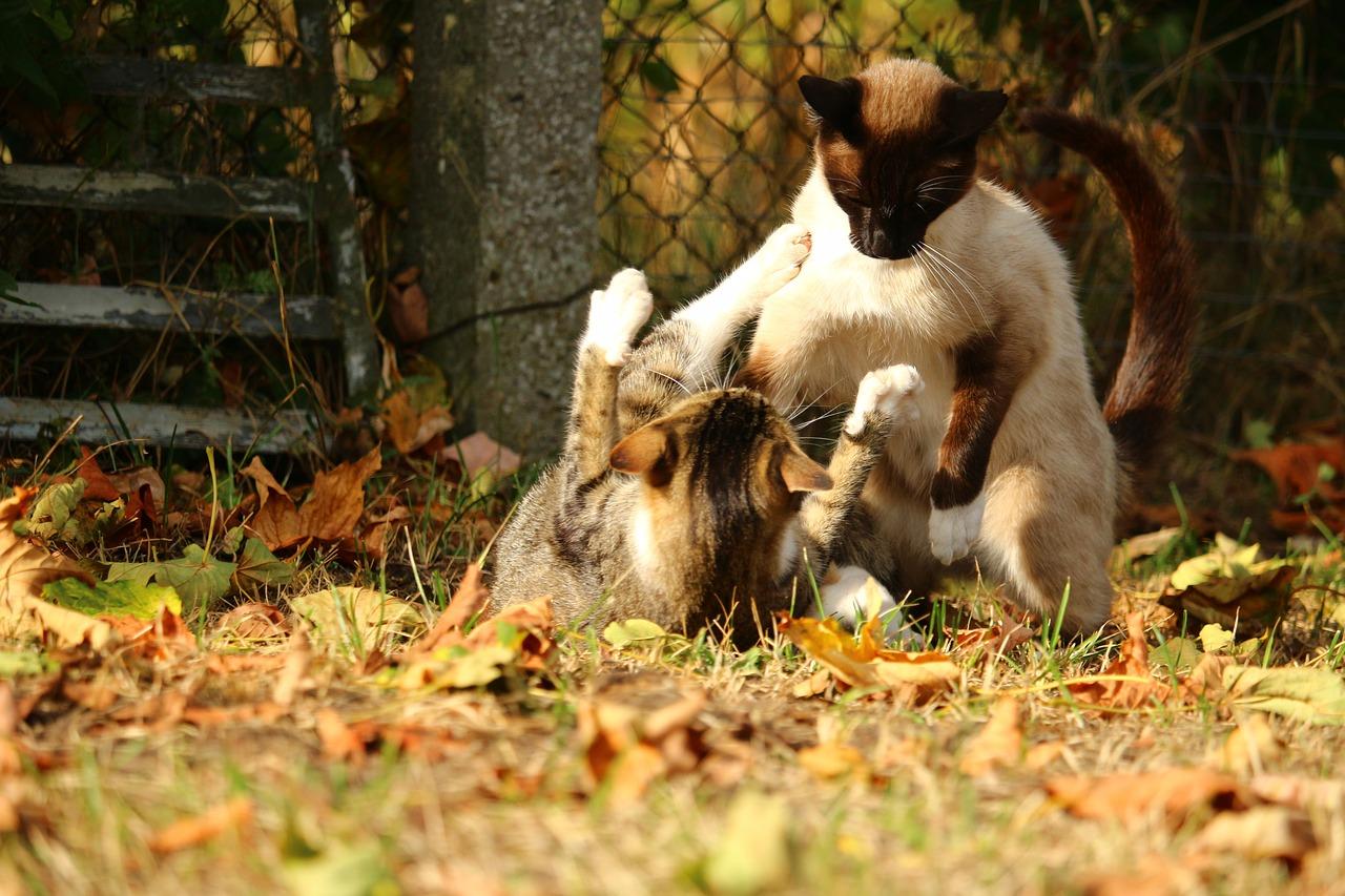 vannes chat The latest tweets from le chat qui grogne (@lechatquigrogne  bravo à nos jeunes lorientais en entente avec les jeunes de vannes qui se classent 2e pour cette.