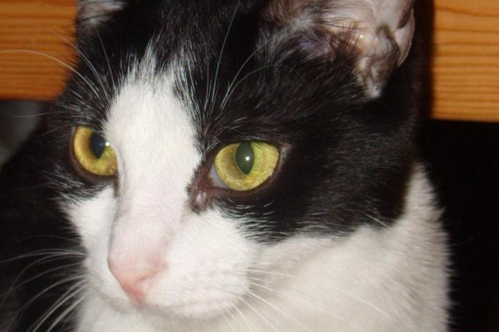 chats adopter spa de vannes et de la r gion. Black Bedroom Furniture Sets. Home Design Ideas